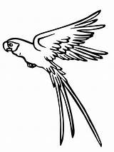 Parrot Flying Coloring Drawing Pages Print Colour Colouring Clipart Cockatiel Parrots Printable Drawings Water Atreyu Lee Getdrawings Squirrel Desenhos Colornimbus sketch template