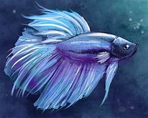 315 best images about ♥ Betta Fish ♥ on Pinterest | Betta ...