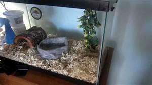 Baby Corn Snake Tank Setup - YouTube