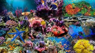 Wallpapers For   Coral Reef Wallpaper 1920x1080  Coral Reef Wallpaper 1920x1080