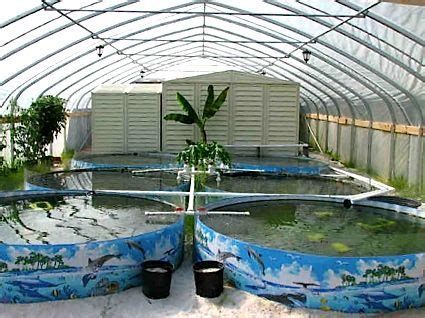 Home Aquaculture Backyard Fish Farming by Sustainable Food Production Tilapia Farm I Currently