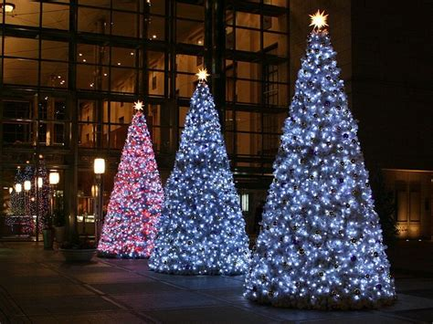 gorgeous illuminations for trees
