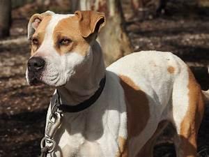 Taille Moyenne Bébé : 15 races de chiens de taille moyenne lsh ~ Nature-et-papiers.com Idées de Décoration