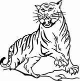 Coloring Tiger Pages Daniel Printable Preschool Printables sketch template