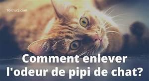 Enlever Odeur Urine Chien : odeur urine chien maison ventana blog ~ Nature-et-papiers.com Idées de Décoration
