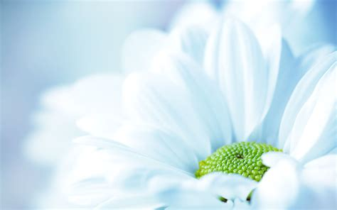 30 Beautiful Flower Wallpapers
