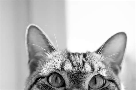 Hd Cat Images, Widescreen, Kitty, Cute Cat Wallpapers