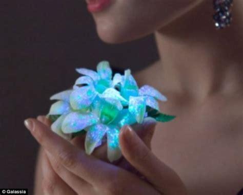 Pflanzen Die Im Dunkeln Leuchten by Natur Und Umwelt German China Org Cn Im Dunkeln