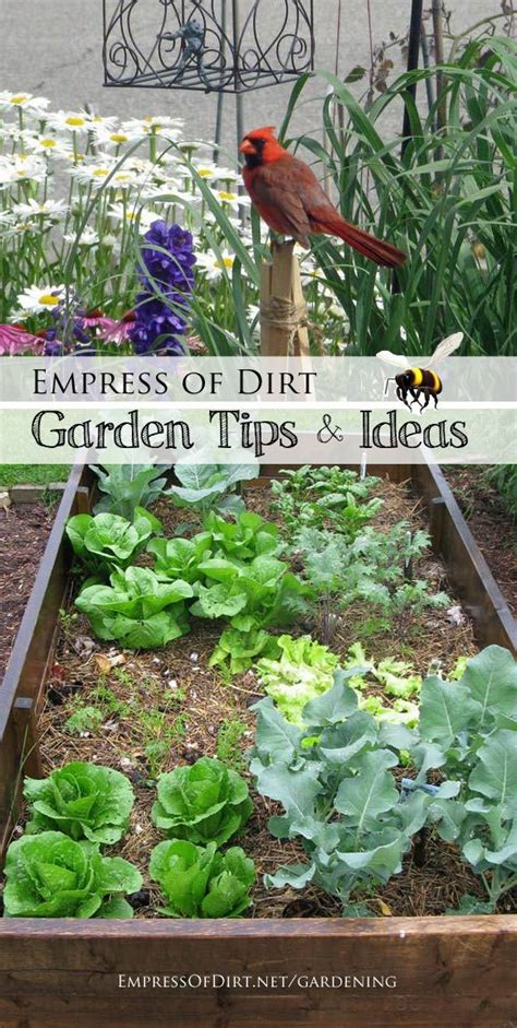 gardening tips projects and tours