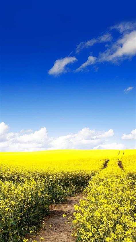 Blue Nature Wallpaper For Mobile by Blue Sky Canola Flower Garden Iphone 6 Plus Wallpaper