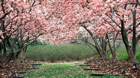 spring garden wallpaper wallpapertag