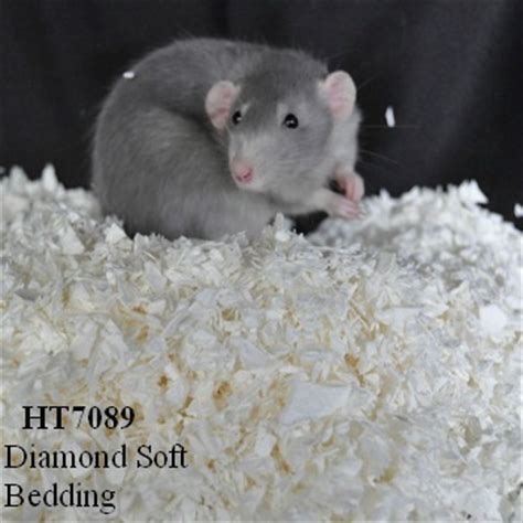 aspen bedding for rats aspen bedding for rats click image for larger version