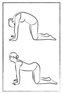 cat cow the 7 best poses for back classic