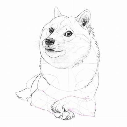 Doge Draw Fun Drawing Shiba Inu Many