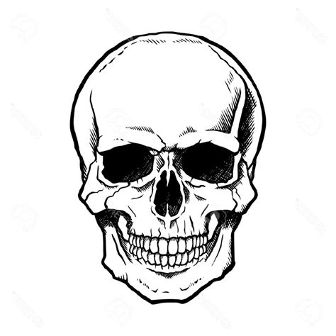 skull sketch easy  paintingvalleycom explore