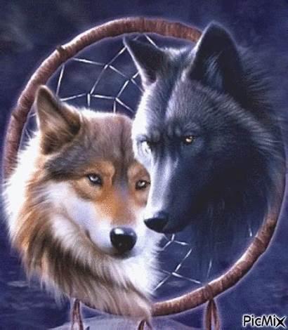 Picmix Wolves Gifs Wolf Animal Magical Belonging