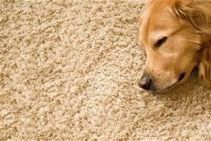 Haare Vom Teppich Entfernen : milchflecken im teppich entfernen so klappt 39 s ~ Bigdaddyawards.com Haus und Dekorationen