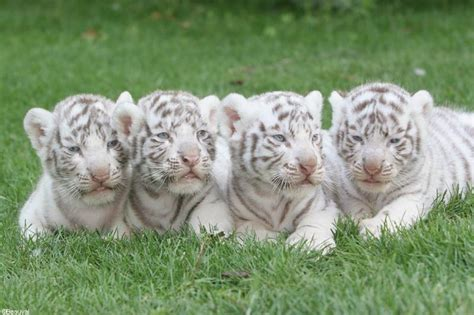 hotel chambre familiale tours top parents fr zoo de beauval parc animalier et hôtel