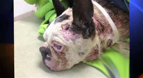 reward offered  horrific case  dog abuse ktla