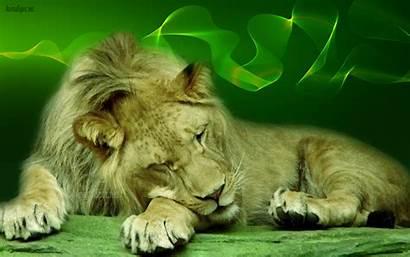 Lion Wallpapers Background Animal Desktop Face Roar