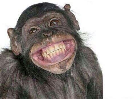 Chango Animales sonrientes Foto de mono Monos divertidos