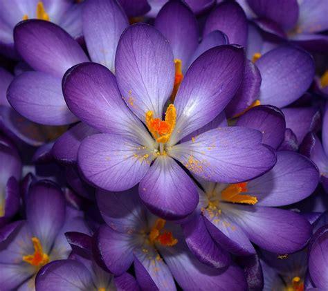 purple flowers cute purple flower weneedfun