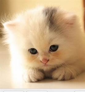 One of the cutest Kitten ever ♥ | Adorable pets ♥ | Pinterest