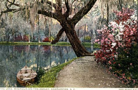 magnolia plantation and gardens azaleas at magnolia plantation and gardens charleston sc