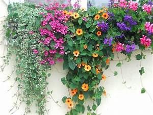 Blumenkübel Bepflanzen Sommer : die 25 besten ideen zu balkonk sten bepflanzen auf pinterest terrasse bepflanzen pflanzk bel ~ Eleganceandgraceweddings.com Haus und Dekorationen
