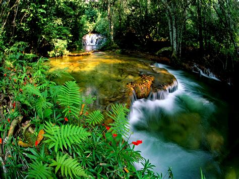 jungle wallpapers pictures images