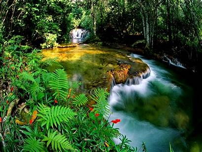 Jungle Desktop Wallpapers Nature Falls Backgrounds Computer