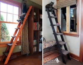 give kitty own ladder to climb hauspanther