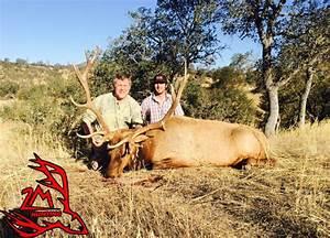 Elk Hunting  U2013 Blacktail Deer Hunting  Wild Pig Hunting