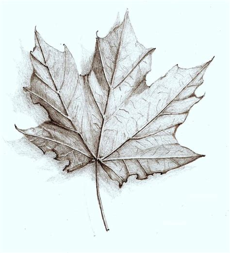 leaf drawing assignment kellers blog site