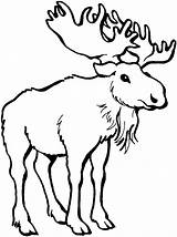 Moose Clip Clipart Antlers Wildlife Coloring Pages Wild Cliparts Animals Library Chucky Bull Clipartion Sheet Clipartix Cartoon Info Chef Wikiclipart sketch template