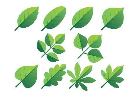 green leaves clipart set   vectors clipart