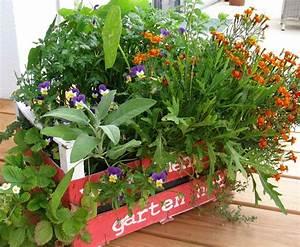 balkon erdbeeren pflanzen krauter salat upcycling With französischer balkon mit upcycling im garten