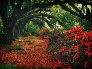 Nature - camichavez my blog