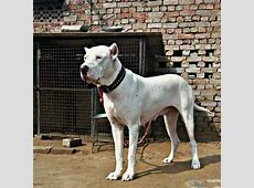Everything You Need To Know About Bully Kutta