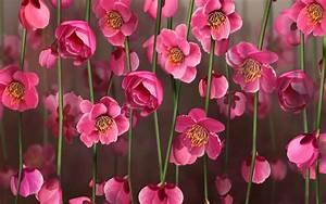 Pink Flower Desktop Wallpapers - Wallpaper Cave
