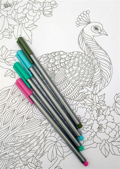 step  step coloring peacock feathers  coloring
