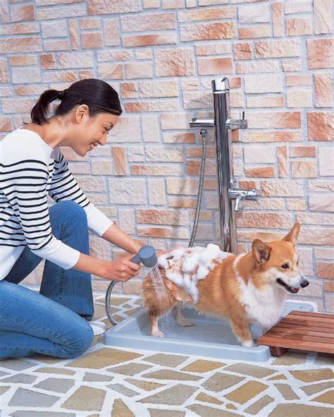 Dog washing station ideas – a practical necessity for the home