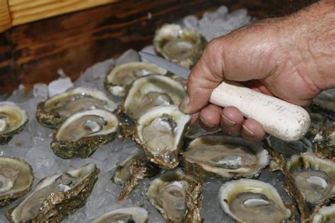 raw  undercooked bc oysters linked   cases