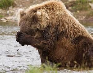 Brown Bears Three