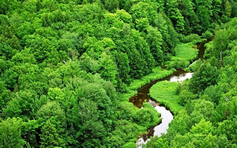green forest wallpaper green forest river wallpaper beautiful places hd Beautiful