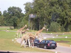 Parks In Hannover : serengeti park picture of hannover lower saxony tripadvisor ~ Orissabook.com Haus und Dekorationen