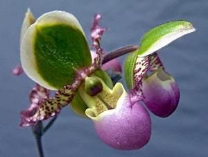 Tomaten Düngen Hausmittel : die besten 25 orchideen ideen auf pinterest orchideenbl ten wachsende orchideen und ~ Whattoseeinmadrid.com Haus und Dekorationen