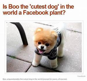 the cutest dog in the world 2013