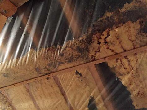 marder im dachboden marder vertreiben dach sch dlingsbek mpfung hamburg und