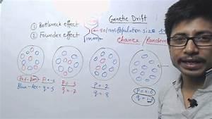 Genetic Drift - Bottleneck And Founder Effect